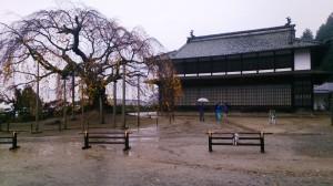 11.08舞台桜