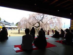 舞台校舎×舞台桜