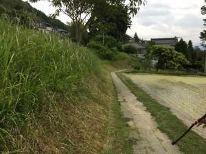 土手草が刈られ歩きやくなりました