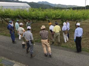作業前に吉川副会長より、剪定方法の説明を受けました。