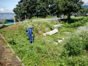 堤内を潤した取水用水門付近の除草作業