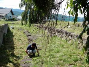 石積護岸の除草作業