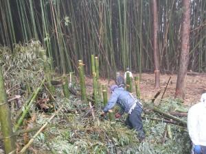 材料の竹を運び出します