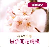 2020年桜開花情報